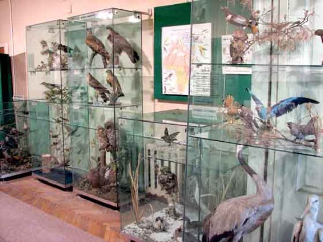 Museum of Vrancea.  Natural Sciences Department - founded in 1948 - director Horia Dumitrescu - FOCŞANI, Vrancea - judeţean - Ştiinţele naturii - Acvaristică, Botanică, Zoologie