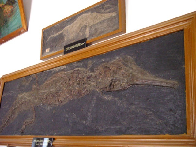 "Palaeontological and Stratighraphical Museum of the ""Babeş-Bolyai"" University - founded in  - director  - CLUJ-NAPOCA, Cluj - în subordinea unei universităţi - Paleontologie, Geologie"